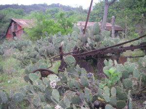 Old Plow & Prickly Pear Cactus